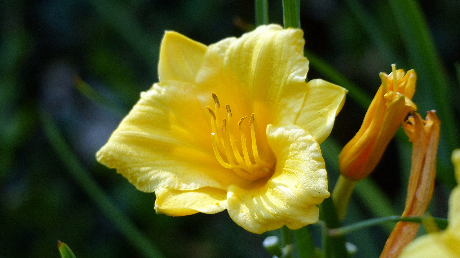 Popular Types of Yellow Flowers | Blooms Today