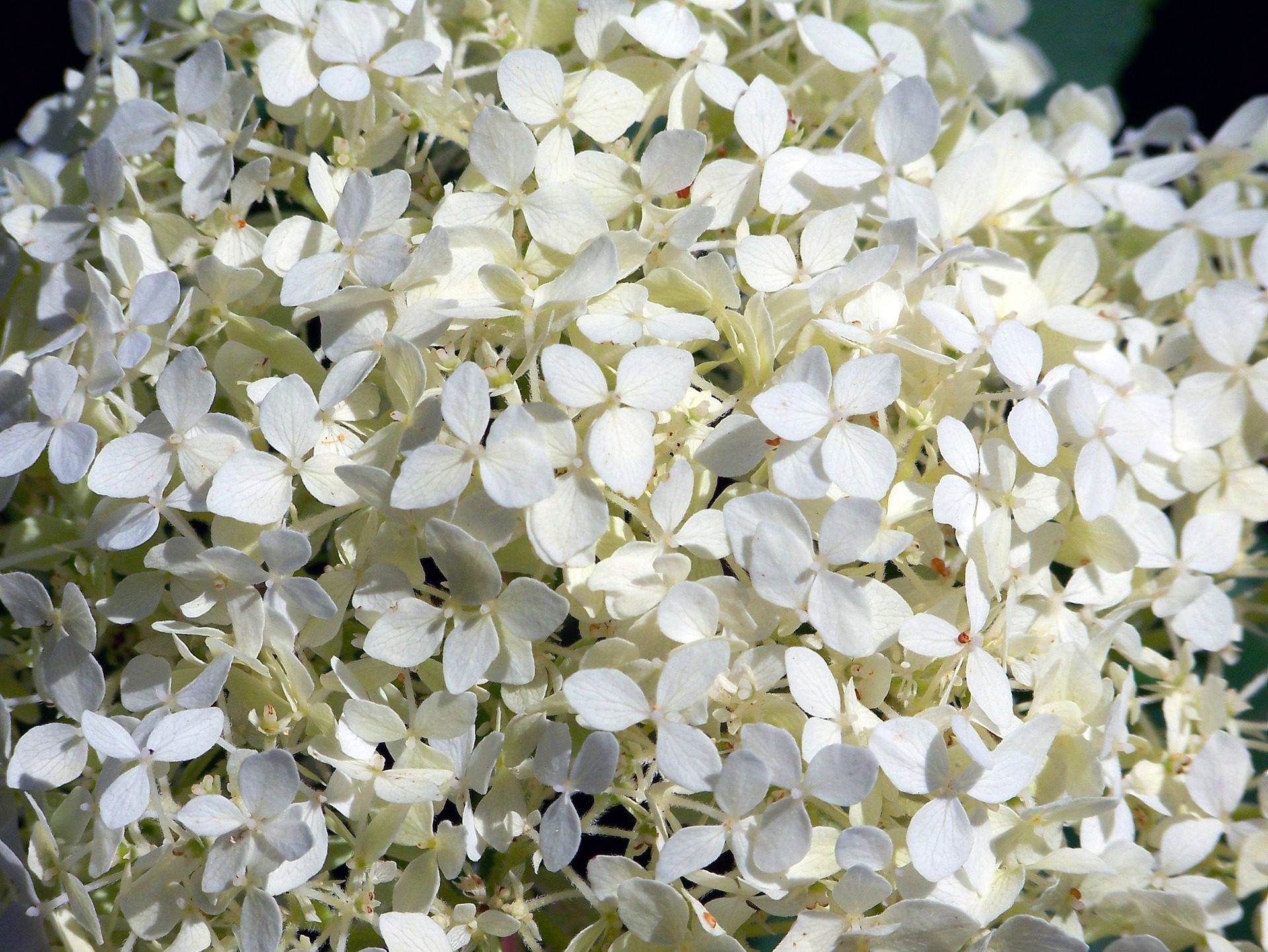 White Flowers Enhance Your Garden