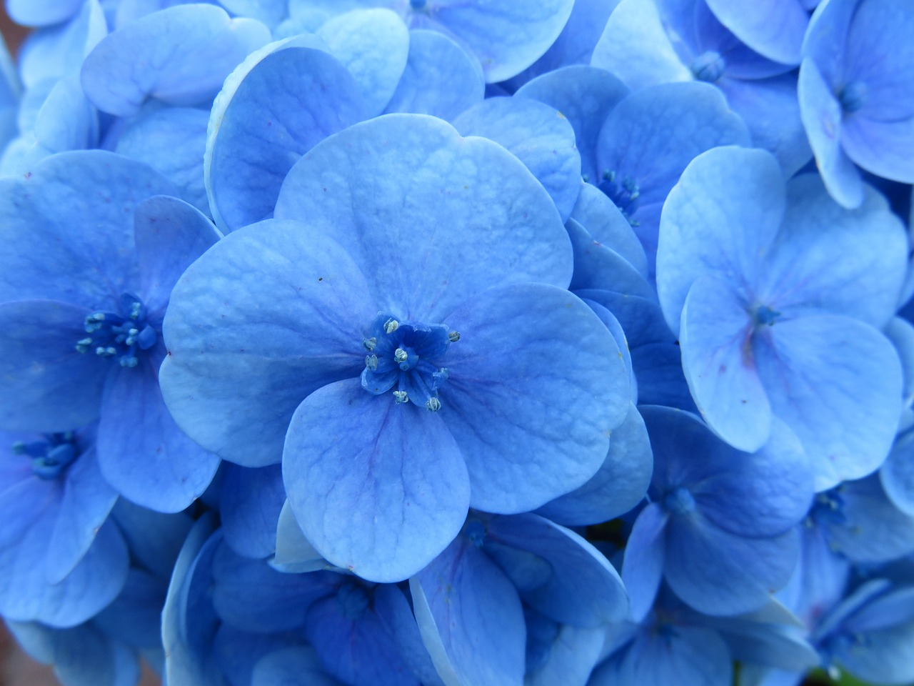 Popular Types of Blue Flowers