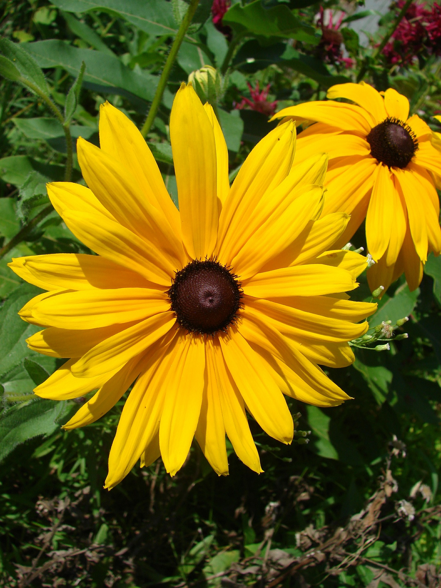 Popular Types Of Yellow Flowers Blooms Today