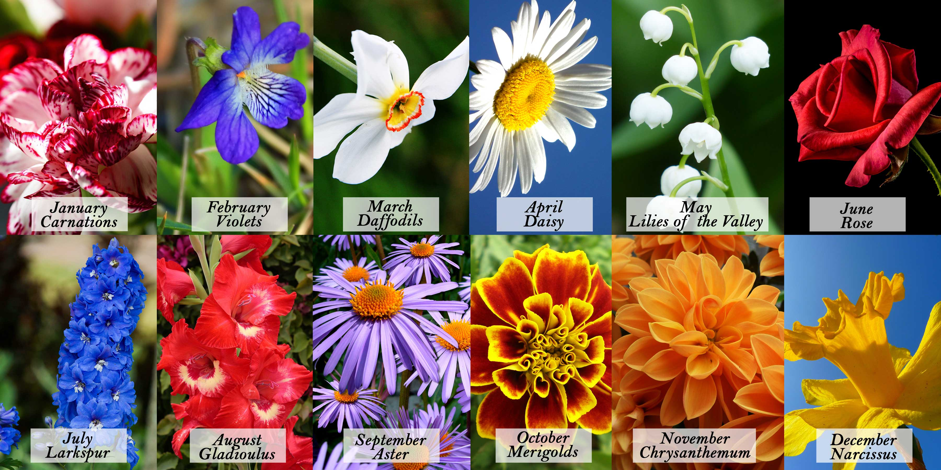 Guide to birthday flowers by month blooms today birthdayflowersbymonth izmirmasajfo