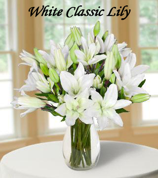 White-Classic-Lily