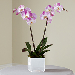 pink-orchid-planter