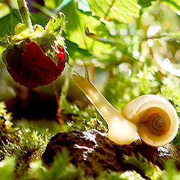 Snail-in-the-Garden