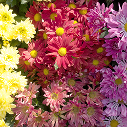 Aster-Feature