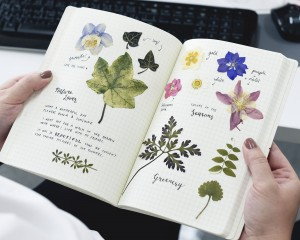 Pressed-Flowers-In-Book